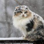 Холод в конце ноября сменится теплом в начале декабря