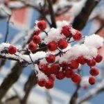 На следующей неделе в Тверскую область придут заморозки