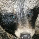 Милосердие не порок. Об ответственном отношении к животным
