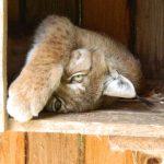 Телевидение: благо или вред? Как животные реагируют на видеосъёмку