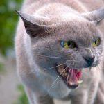 Бешеные лисы, собаки и коты: в Тверской области фиксируют новые случаи смертельного заболевания