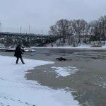 Юноша в Твери пытался помочь собаке, тонущей в полынье. Спасать пришлось обоих (видео)