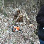 В Ржеве хотят построить площадку для выгула собак, уничтожив лес и ручей? Жители против!