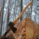 В ходе изыскательских работ по строительству ВСМЖ-1 в Конаковском районе незаконно вырубили деревья