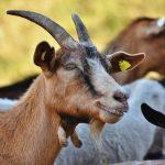 Разработана вакцина против коронавируса у животных