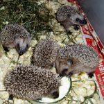 Можно ли выпускать в природу купленных или подобранных диких животных?