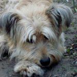За что же не любить дворняг? Беспородные собаки не обделены «талантами»