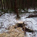 Жители Калининского района сомневаются в законности вырубки леса вблизи деревни Каблуково