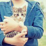 Владельцев кошек и собак обяжут регистрировать своих любимцев?
