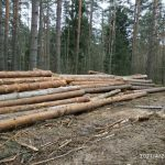 В соцсетях Калининского района сообщают о незаконных вырубках в Дуденевском природном историко-культурном заказнике