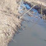 В социальных сетях продолжают появляться сообщения о загрязнении реки Мологи в Максатихе