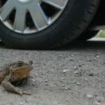 Пожалейте лягушек и жаб!