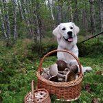 В России обяжут чипировать домашних животных и ужесточат правила для грибников