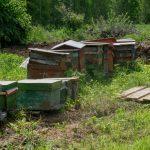 Пчёлы – это хорошо?