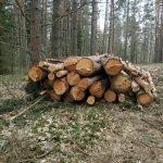 Под Тверью под видом санитарных вырубок продолжают валить здоровый лес?