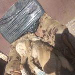 В Ржеве ищут живодеров, до смерти замучивших собаку, и пытаются спасти растерзанную садистом кошку