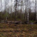 Историю с участками для многодетных в Тверской области покажут на федеральном канале