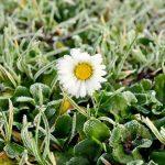 МЧС предупреждает о заморозках в ближайшие двое суток