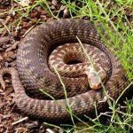 Жители Тверской области жалуются на нашествие клещей и змей