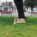 Бездомные животные могут жить на улицах и не причинять вреда: стамбульский опыт