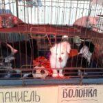 Животных запретят продавать на рынках и в магазинах