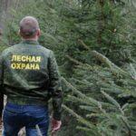 В Тверской области ограничили посещение леса