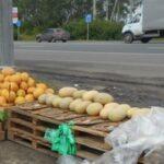 Тверской Роспотребнадзор рассказал, где опасно приобретать дыни