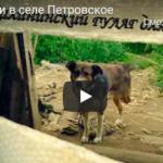 Приют для животных или собачий «концлагерь» в Калининском районе? Выясняли тверские блогеры