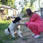 Здание собачьего приюта в Ржеве продали вместе с питомцами. Зоозащитники бьют тревогу по поводу дальнейшей судьбы животных и возмущаются бездействием власти
