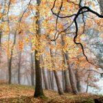 Осень придёт раньше обычного