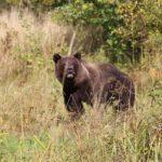 От медведей до лосинных клещей. Кого опасаться в тверских лесах этой осенью?