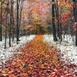 Погода в ноябре будет в пределах нормы