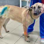 Жители Твери просят наказать живодёра, умышленно наехавшего на собаку